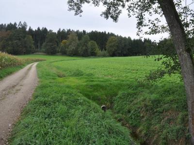 Bremse bei Starkregen: Oberes Einzugsgebiet Hagenach, Bild: Schmitt