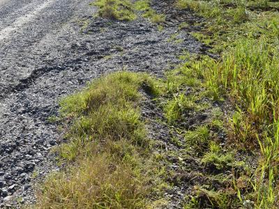 Die Abspülung entlang des senkrecht zum Hang verlaufenden Schotterweges führt letztendlich zur Einschwemmung von Geröllmaterial in den angrenzenden Ackerschlag.
