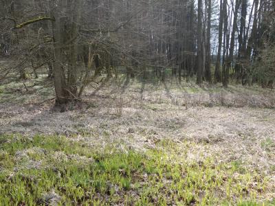 Landschaftsstrukturelement - Feuchtfläche mit typischem Bewuchs