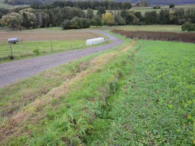 Durch mangelnde Pflege bereits stark verlandeter Grabenabschnitt am Südlichen Hang des Projektgebiets, wodurch der Oberflächenwasserabfluss merklich gestört wird