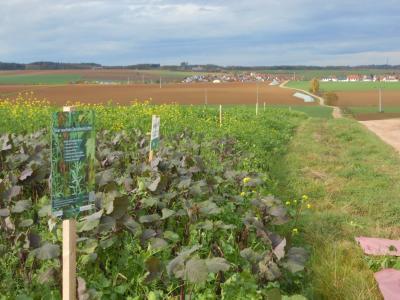 Sechs Mischungen hatte der Sandinger Landwirt Robert Engelbrecht ausgebracht