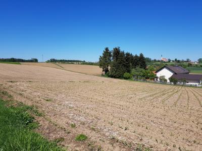 Ackerflächen im Projektgebiet