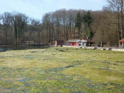 Algenproblematik im Waldsee