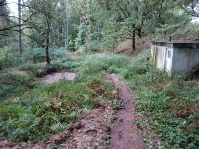Ein Mulde im Wald fängt die Bodenerosion von der Abb. 4 auf.