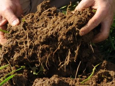 Sie tun alles für eine gute Bodenstruktur? (Bildrechte: BZA)
