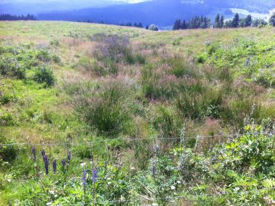 von der gleichen Stelle aus nach unten fotografiert: Die Vegetation zeigt vernässte Stellen in der Wiese an.