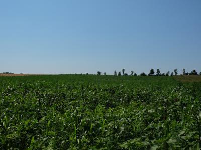 Biogas-Hanf-Mischung im Juli