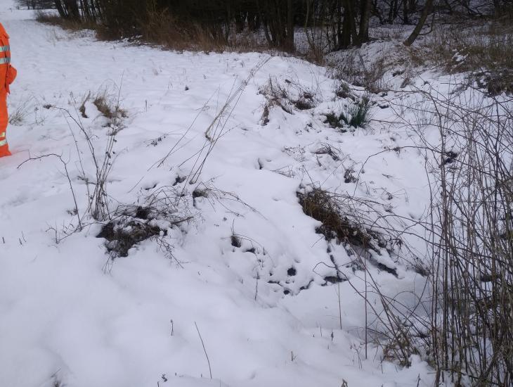 Feldgehölze in der Landschaft sind wichtig, das Bild sollte aber vor allem ein Rückhaltebecken zeigen. Im derzeitigen Zustand sind Pflegarbeiten wie entschlammen unmöglich.