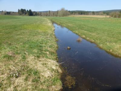 Wasserrückstau im Hirtenbach
