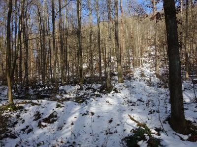 Im Rahmen der Durchforstung quer zum Hang abgelegtes Totholz wirkt als Abfluss- und Erosionsbarriere und baut humosen Boden auf