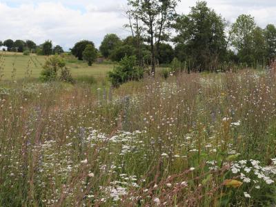 Auf der Retensionsfläche hat sich gut ein Jahr später ein wunderschöner Lebenstraum für Insekten und Tiere entwickelt (Aufnahme vom 02.07.2020)