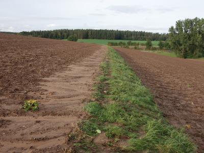Bereits ein kleiner Absatz mit Grünstreifen kann Bodenerosion stark mindern.