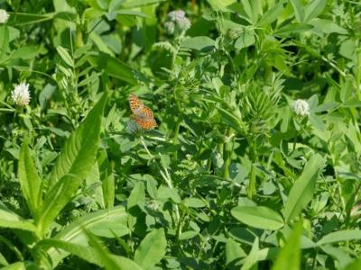 Zwischenfrüchten mit hoher Biodiversität und Artenreichtum