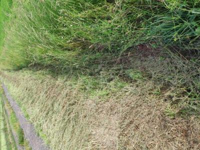 Eintrag von Sedimenten in den Graben ist deutlich reduziert.