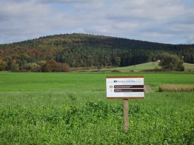 Zwischenfruchtanbau im boden:ständig Projekt Seßlach