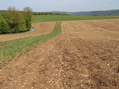 Abbildung 3: Versuchsfläche nach der Maisaussaat am 08.05.2020