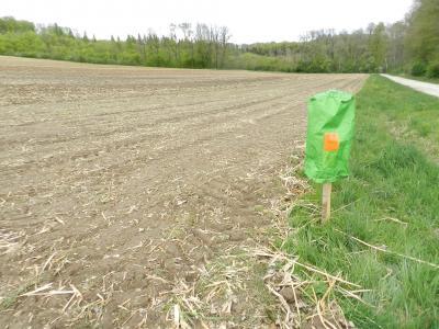 Breiter Pufferstreifen am Hangfuß, um Bodenabtrag in den Graben zu verhindern