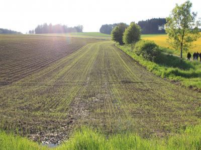 Neu angelegter Gewässerschutzstreifen (Bildquelle: Ruht Brummer)