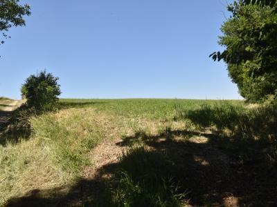 man sieht: nichts - nach verheerenden Erfahrungen der Vergangenheit aus Erosionsschutzgründen angelegtes Grünland
