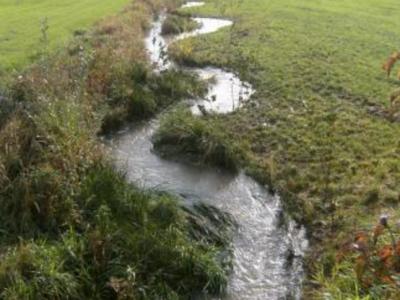 Bina-Abschnitt nach der Begrünung mit Bepflanzung mit Erlen