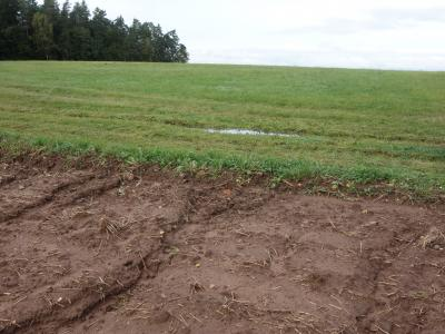 Auch aus dem Grünland kann so viel Wasser fließen, dass Erosion entsteht.