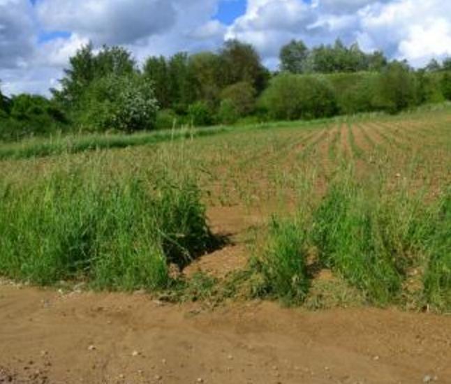 Kommunale einjährige Förderung, Grünstreifen halten den Schlamm