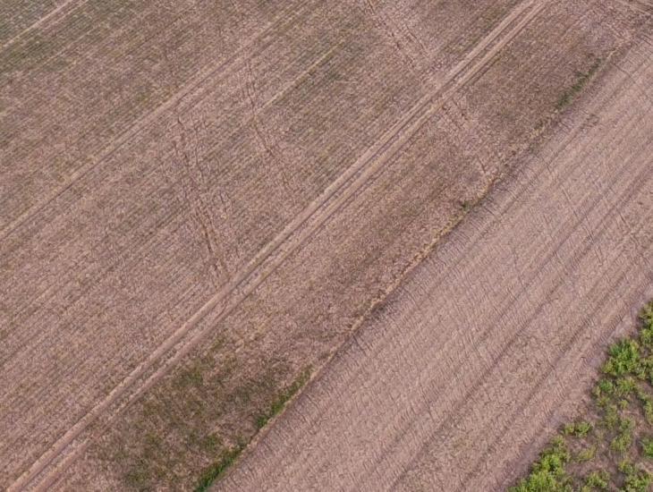 Spuren des überlaufenden Wassers aus einem Zuckerrübenbestand (vorne) in die wegparallele begrünte Abflussmulde