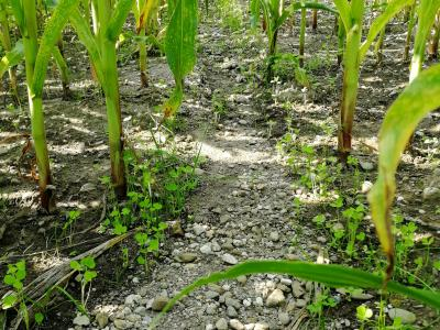 Erosionsschäden in Pflug-Variante