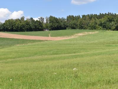 Schutzstreifen auf dem Ackerschlag westlich der Kühleithen im Sommer 2020, die für den Streifen gewählte Zwischenfruchtmischung ist wg. Wassermangels noch nicht aufgelaufen