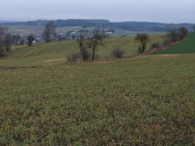 Mehr davon - Effektive Bremsen für den Wasserabfluss: Zwischenfrüchte und Heckenriegel, hier im Februar bei Oberkotzau.