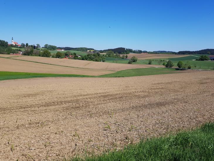 Blick auf die hügeligen Ackerflächen im Hintergrund die Kirche von Oberbergkirchen